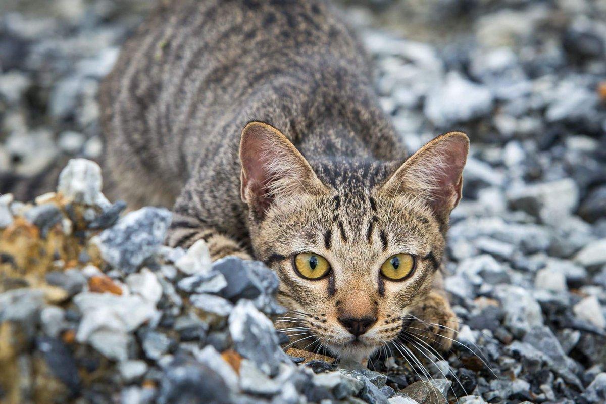 ผลการค้นหารูปภาพสำหรับ แมวออกลา