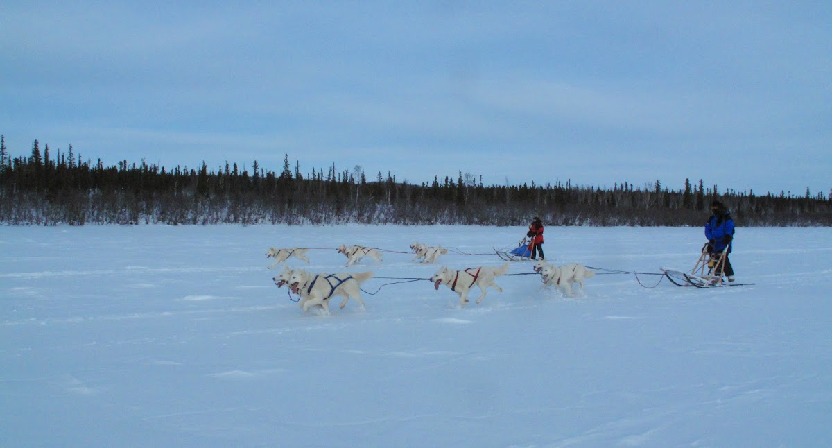 Dog Mushing Fun Run