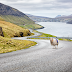 Sheep View: Where there's a wool, there's a way