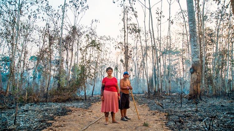 desmatamento, amazônia, índios, queimadas, agropecuária