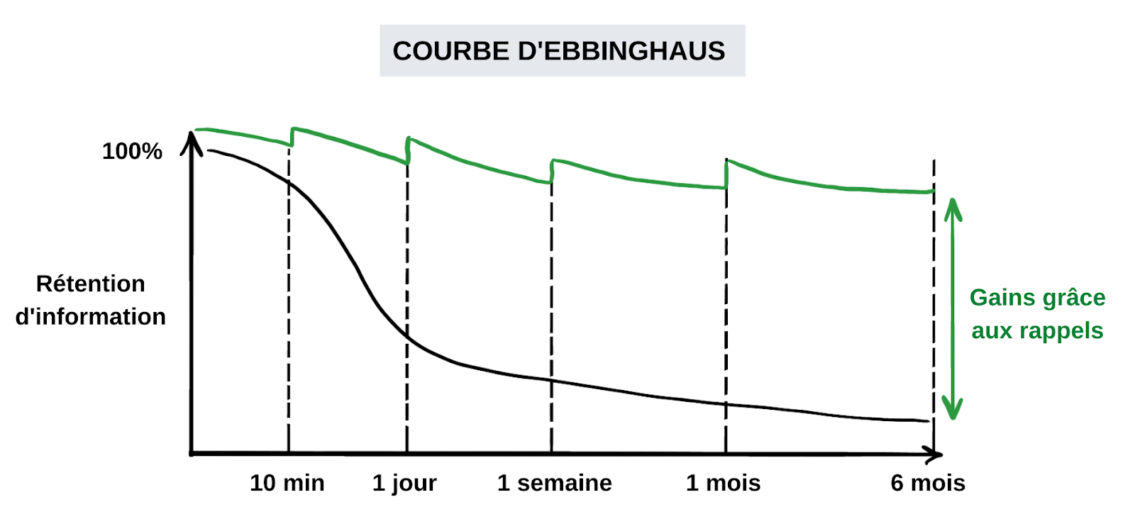 Courbe d'Ebbinghaus : Comment mieux mémoriser ce que l'on apprend ?