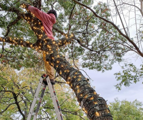A talented Shine employee stringing up Halloween lighting around a client's tree.