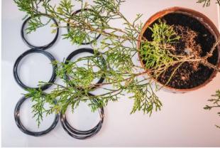 substrato Fazer um bonsai passo a passo
