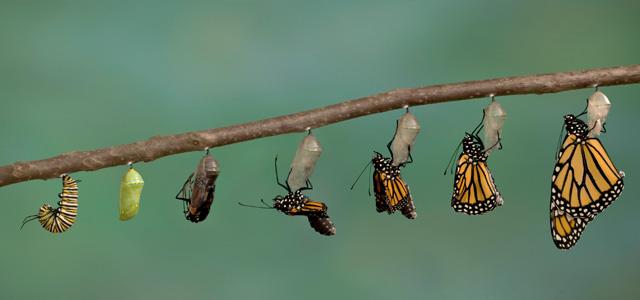 Transformation Science