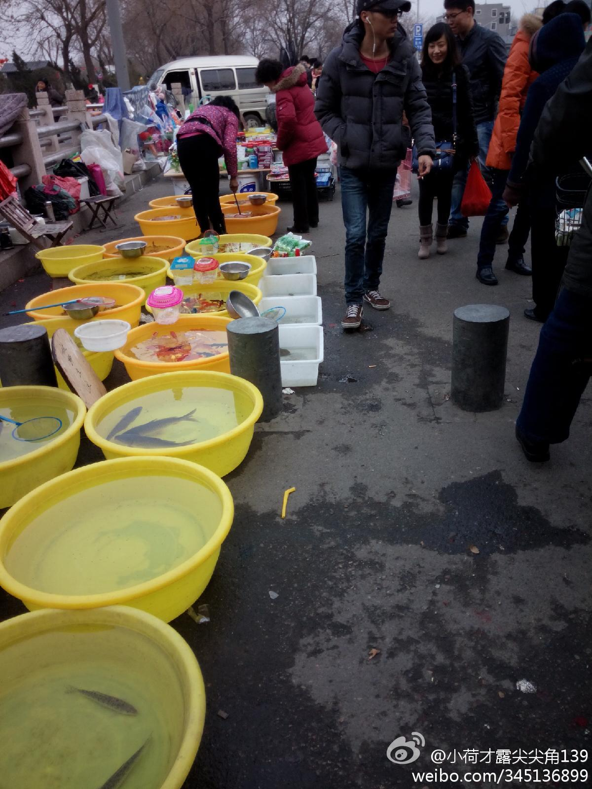 Live fish for sale in China. (Sina Weibo)