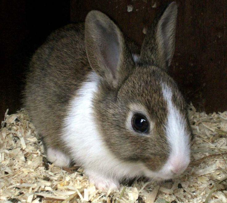 baby Rabbit.jpg