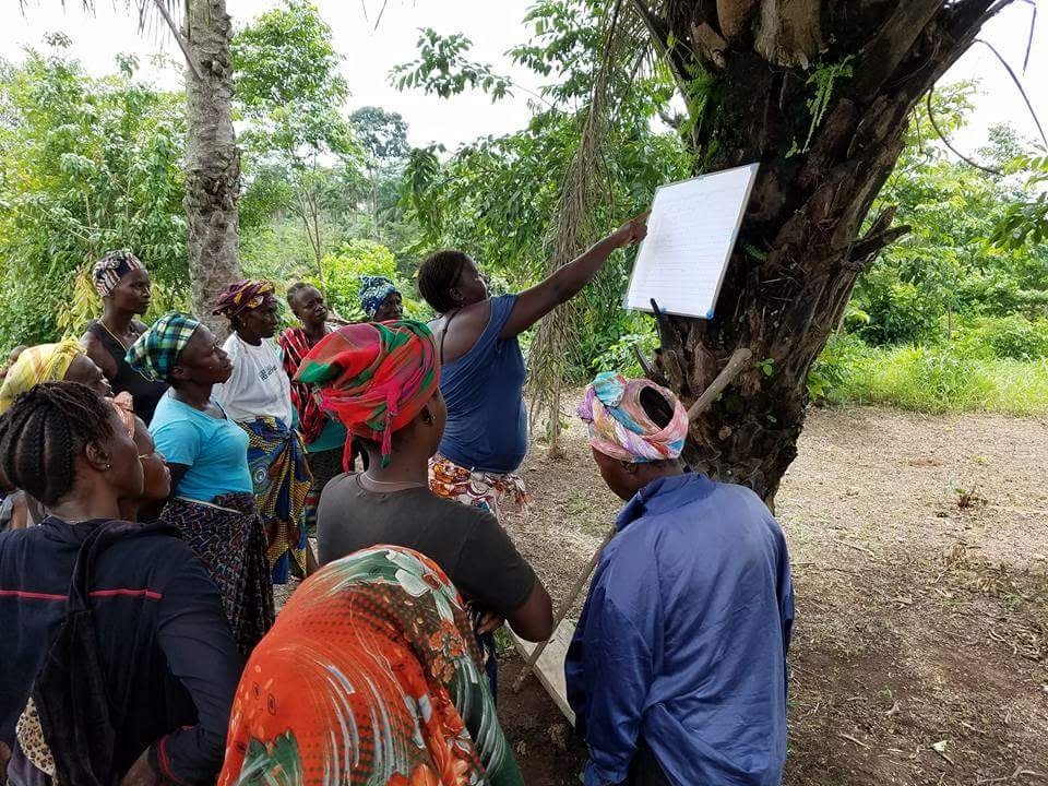 People in Sierra Leone gathered around a tree and pointing to a board that seems to contain a schedule or list