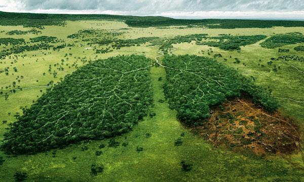 Kết quả hình ảnh cho phá hoại hệ sinh thái