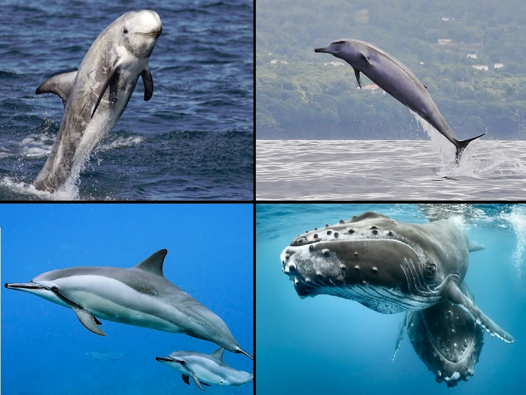 10 Surprising Facts About A Whale One Find Revealing (Best Of 2021)