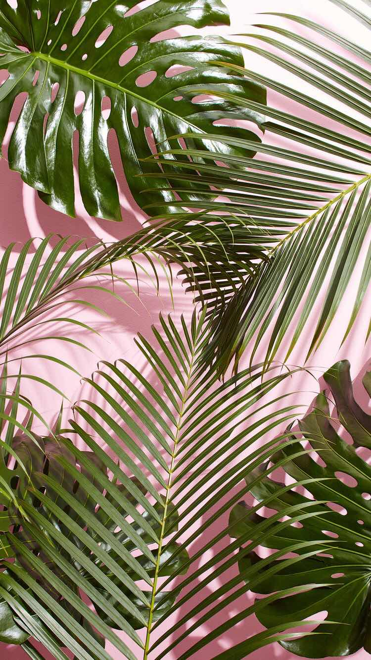 Iphone And Android Wallpapers Tropical Plant Wallpaper For Iphone And Android