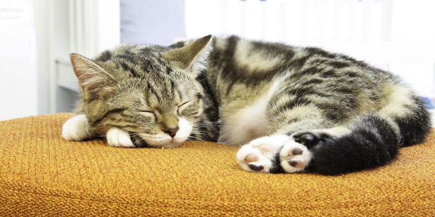 Tip làm việc tại nhà hiệu quả: Sắp xếp thời gian nghỉ ngơi