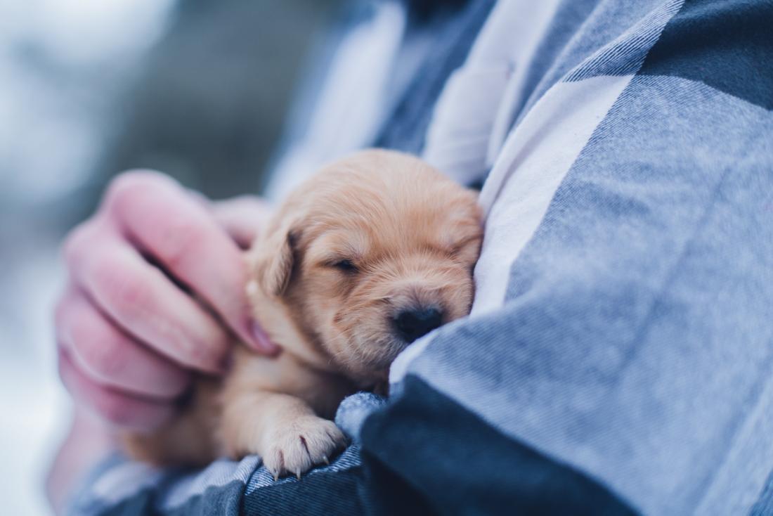 person snuggling puppy