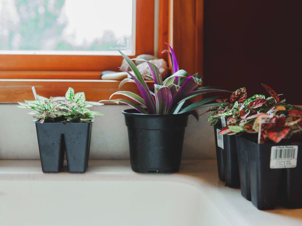 4 petites plantes en pot au bord d'un évier