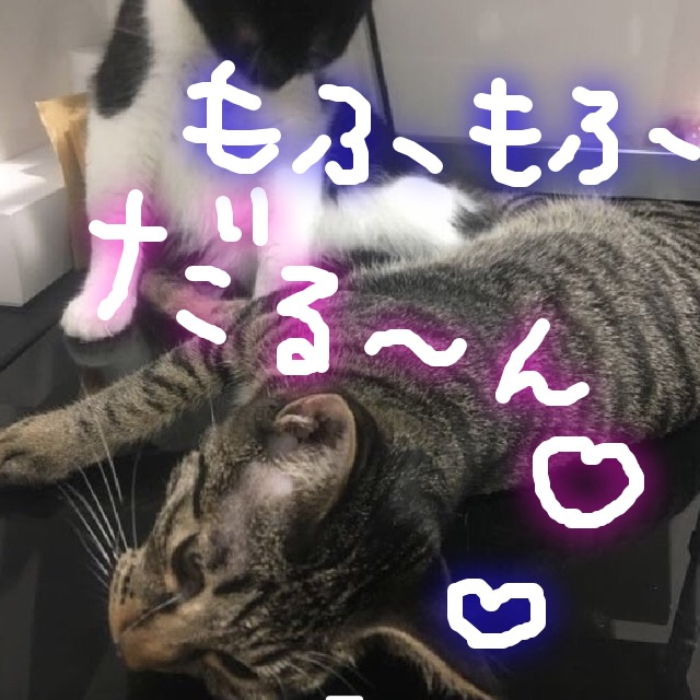 猫を抱っこ好きにする方法と上手な抱っこの仕方