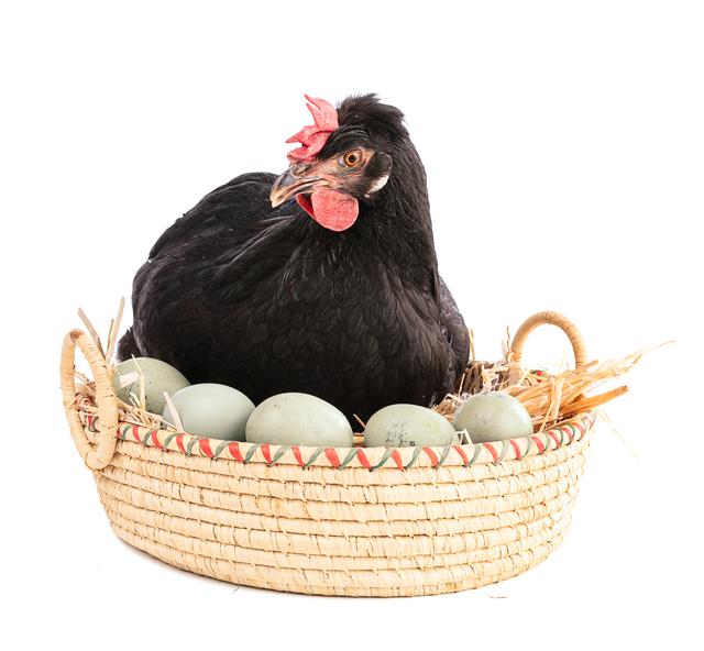 家畜の体調を整える!EMぼかしをエサにするとどんな効果があるの?