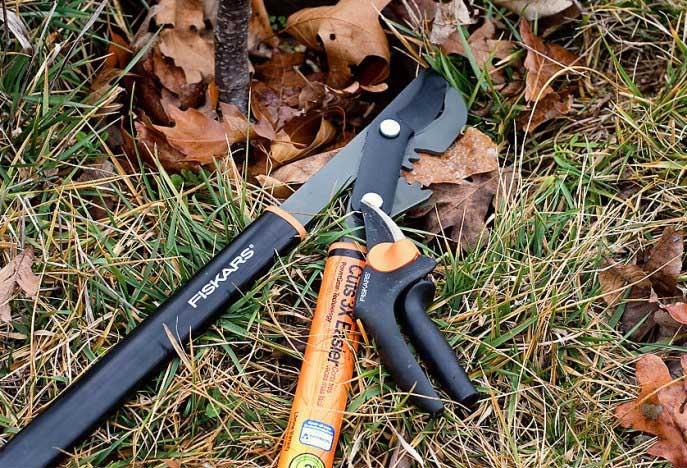 Инструменты для обрезки вишни