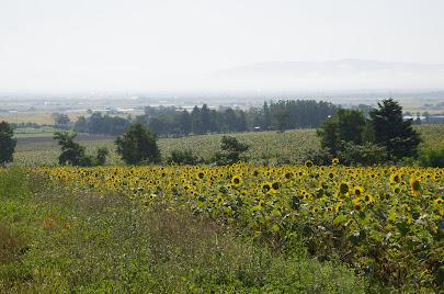 丘の上の区画