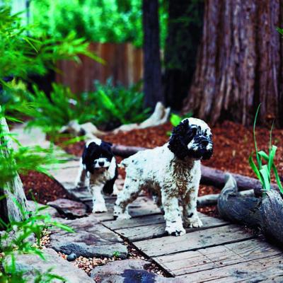 Dogs enjoy patrolling their territory so consider adding a path.  Photo: Thomas J. Story