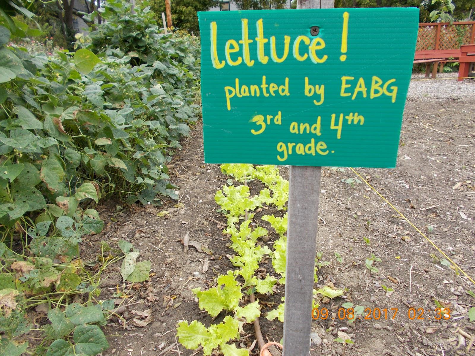 Columbus Lettuce.JPG