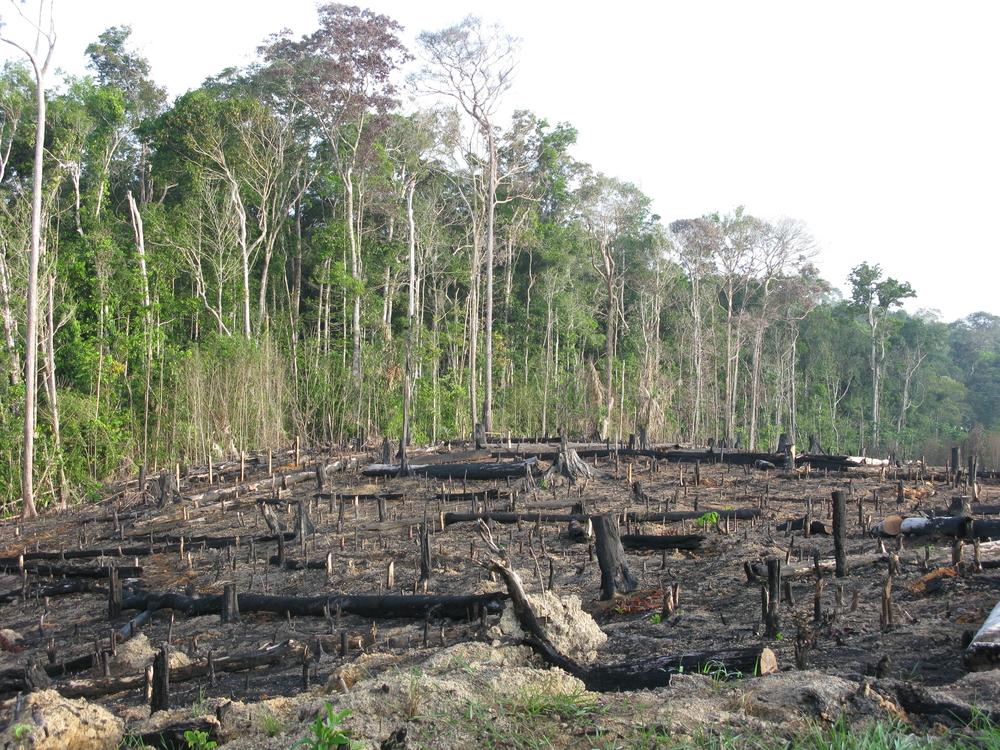 Desmatamento na Amazônia afeta imagem da agropecuária brasileira. (Fonte: Shutterstock/guentermanaus/Reprodução)