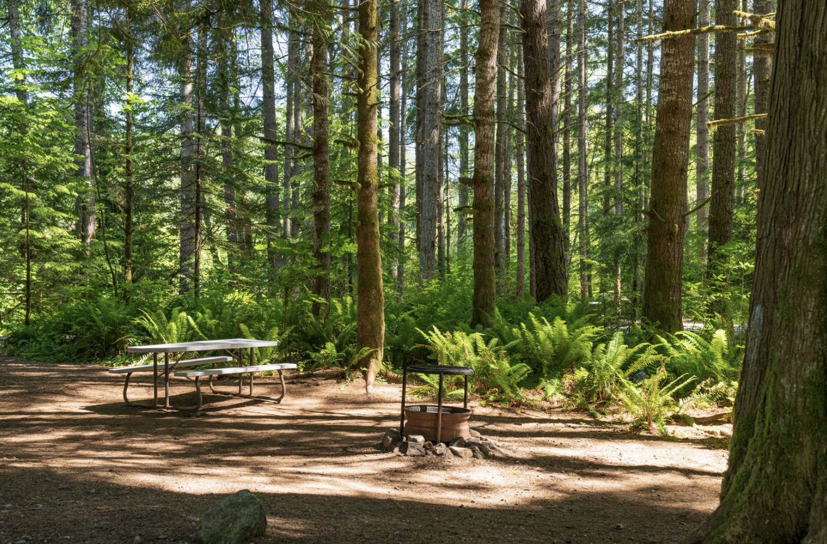 Secluded campsite in the woods with picnic table and fire pit at Elkamp Eastcrest