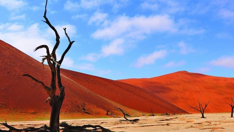 the iconic Dead Vlei, Sossusvlei