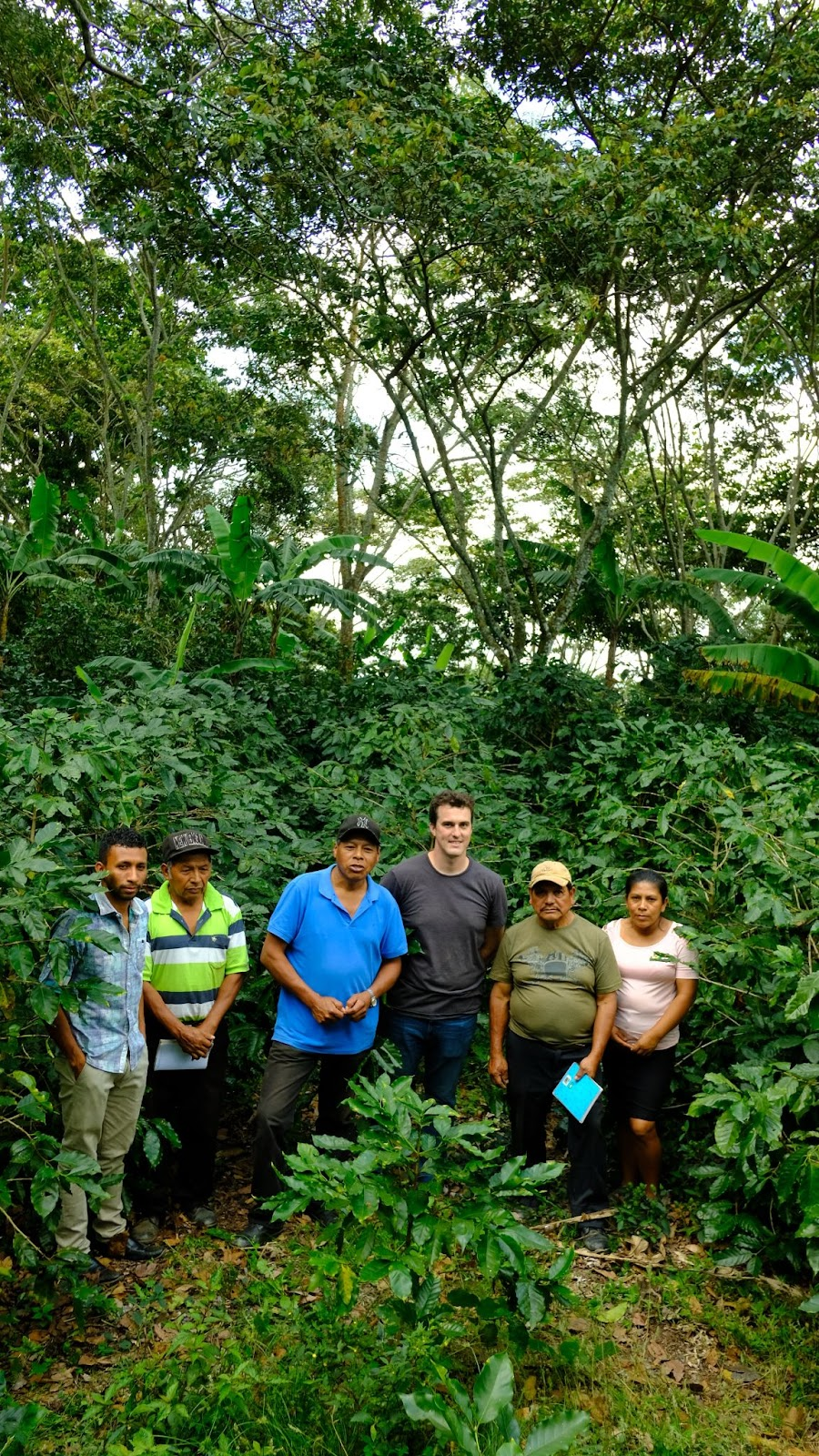 """Logan Allender with Cooperativa Santo Domingo in San Juan Del Rio Coco, Nicaragua. Notice the coffee height relative to the people and the """"Sombre"""" or canopy overhead. It is a combination of Red and Black Guava trees, along with local flora."""