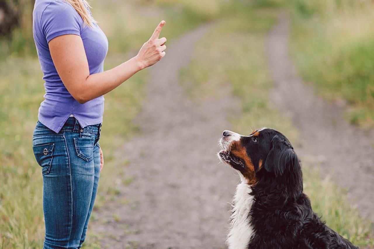Vì sao nên lựa chọn mua chó tại trường huấn luyện chó chuyên nghiệp?