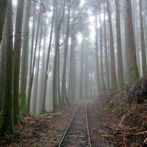 嘉義-特富野古道-森林鐵道