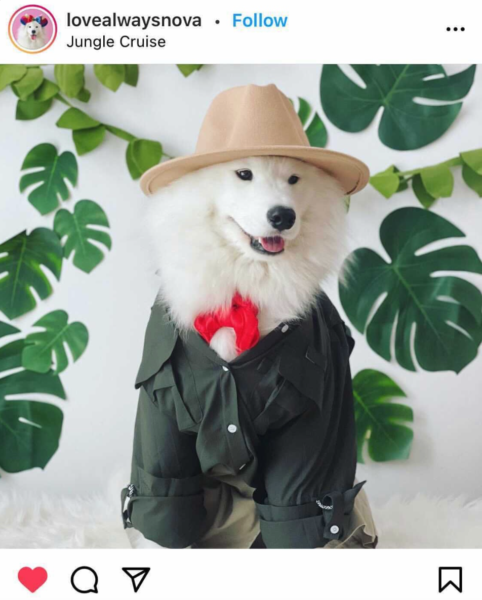 Jungle Cruise Halloween Costume Ideas For Dogs