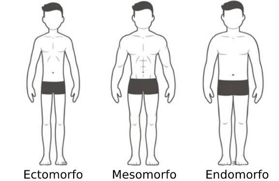 Ilustración de los distintos tipos de cuerpos masculinos de acuerdo a su somotipo