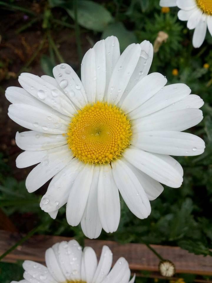 L'image contient peut-être: fleur, plante, plein air et nature