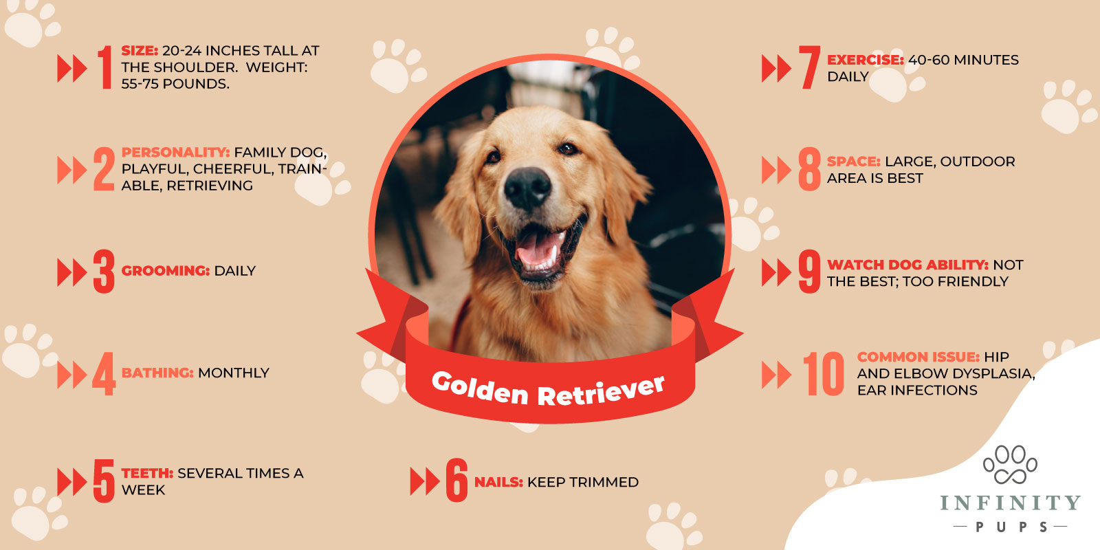 general information about golden retrievers
