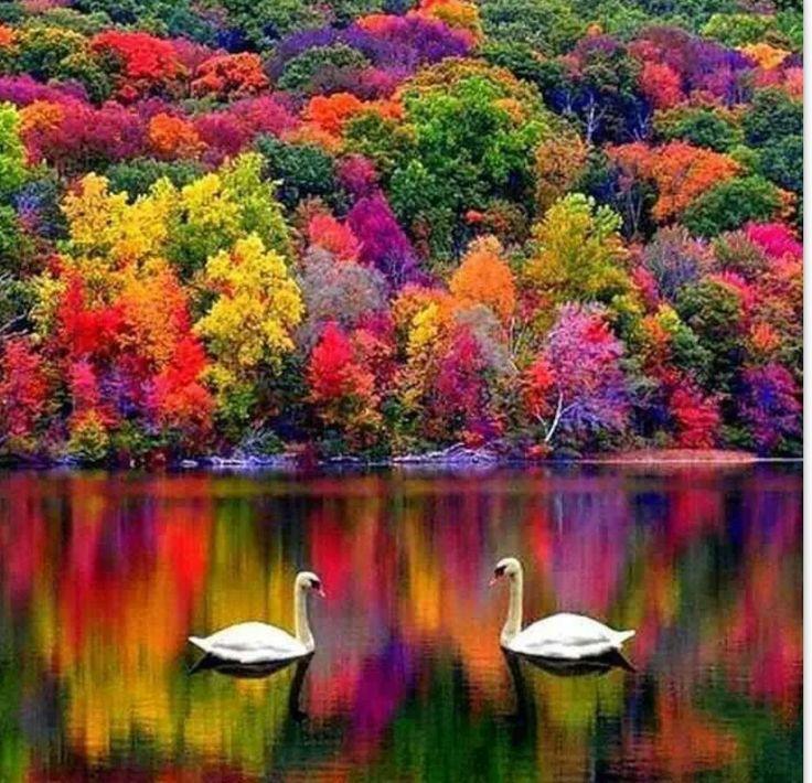 https://i.pinimg.com/736x/d5/ba/af/d5baaf5aed89a19c3ffdafb8c57a38b4--swan-lake-new-hampshire.jpg