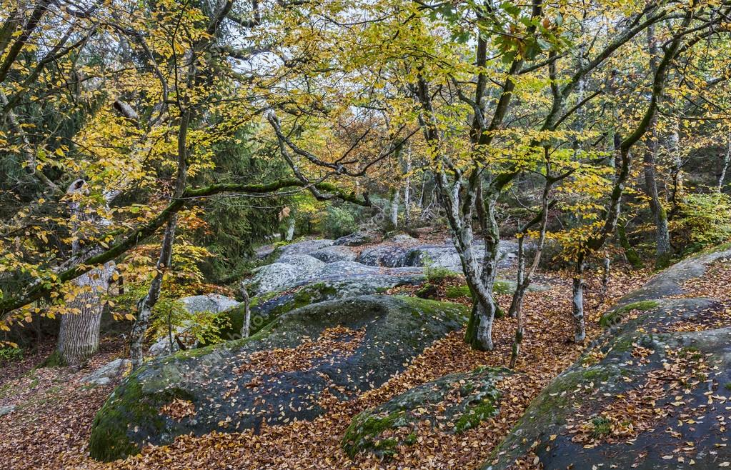 depositphotos_91119112-stock-photo-autumn-scene-in-fontainebleau-forest.jpg