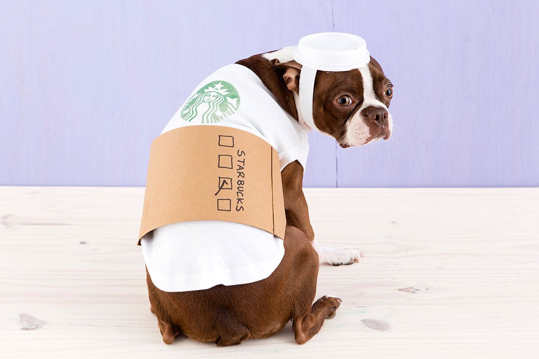 Pug wearing a Starbucks cup costume