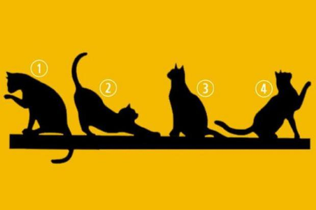 Escolha um dos quatro gatos e conheça o seu propósito de vida neste novo teste de personalidade.  (Foto: mdzol.com)