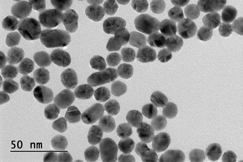 Protein and antibody bioconjugation to gold nanoparticles - TEM image
