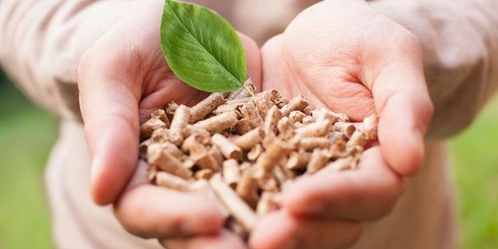 Biomassa (Fonte: Portal Energia/Reprodução)