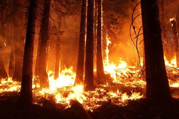Image result for Fires are crucial component of some Forest Systems