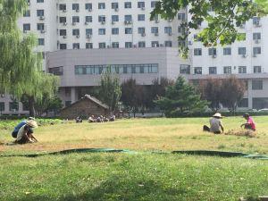 VU à l'école, les tondeuses ça n'existe vraisemblablement pas ici, à Bejing