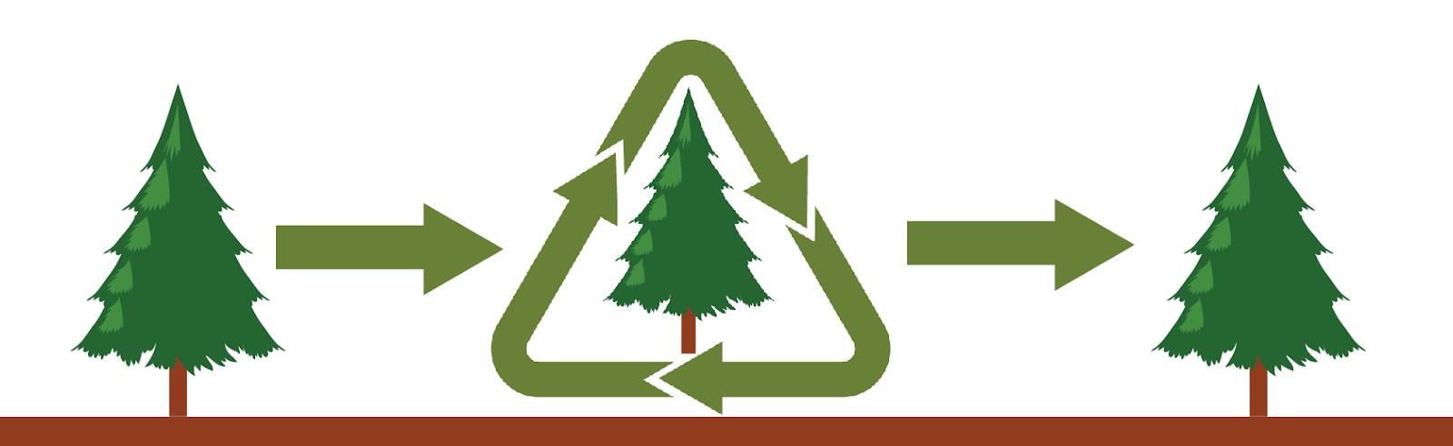 C:\Users\PC\Desktop\Bozicna drevesa\blogi slike\življenjski cikel 2.png