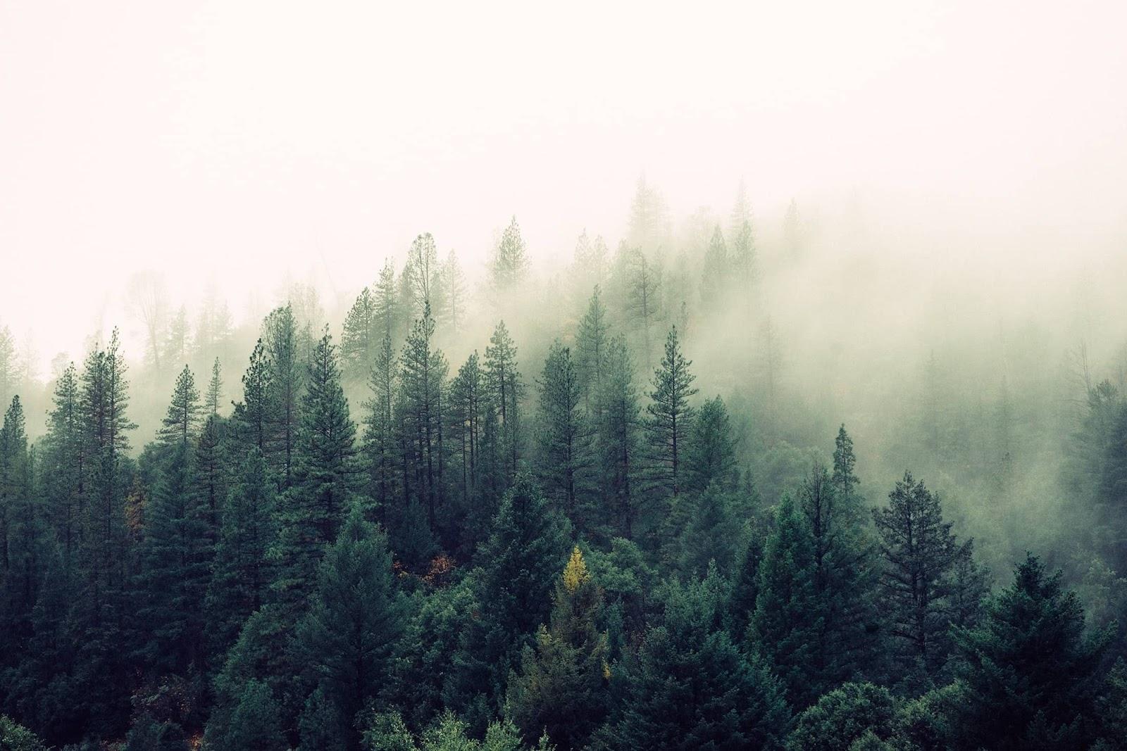 alberi-foresta-nebbia-buoni-sconto-treedom