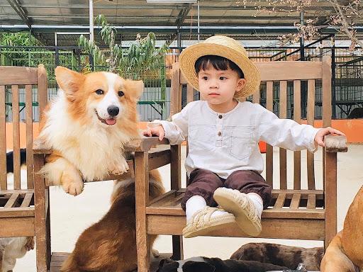 Check-in tại Puppy Farm