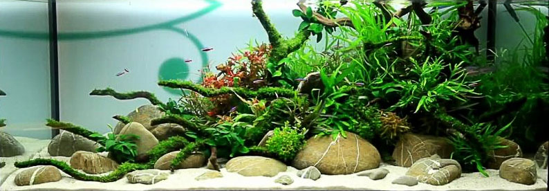 Will Aquarium Plants Grow In Sand? Yes They Can! 3