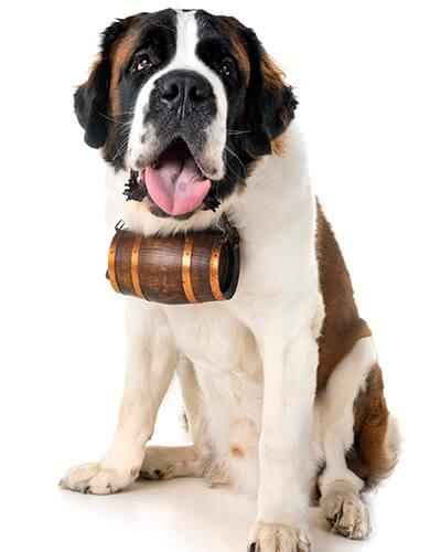 St. Bernard Oak Barrel Dog Collars - Urban Barrel Company