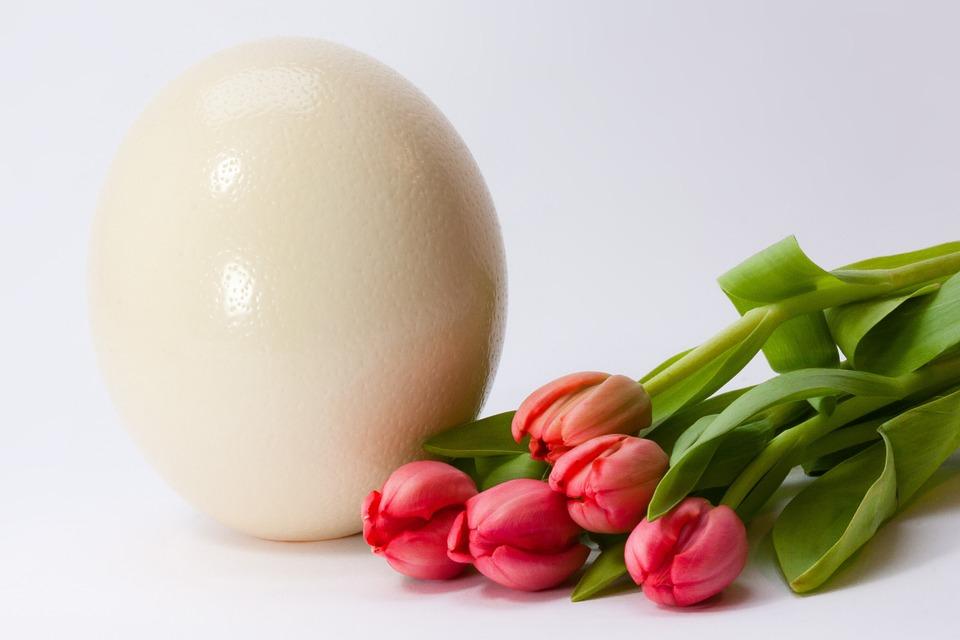 Egg, Spring, Frühlingsanfang, Spring Awakening, Easter