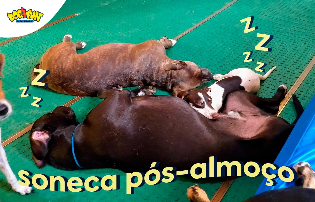 """Foto: três cachorros dormindo juntos. Texto na foto: """"soneca pós-almoço"""""""