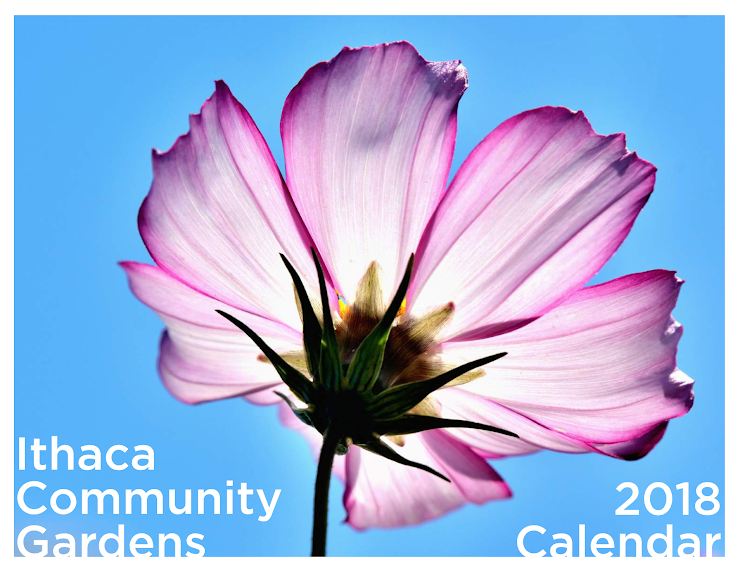 "Calendars are $15 /each, and measure 11"" wide x 17"" tall when hanging (11"" wide x 8.5"" tall when folded)."