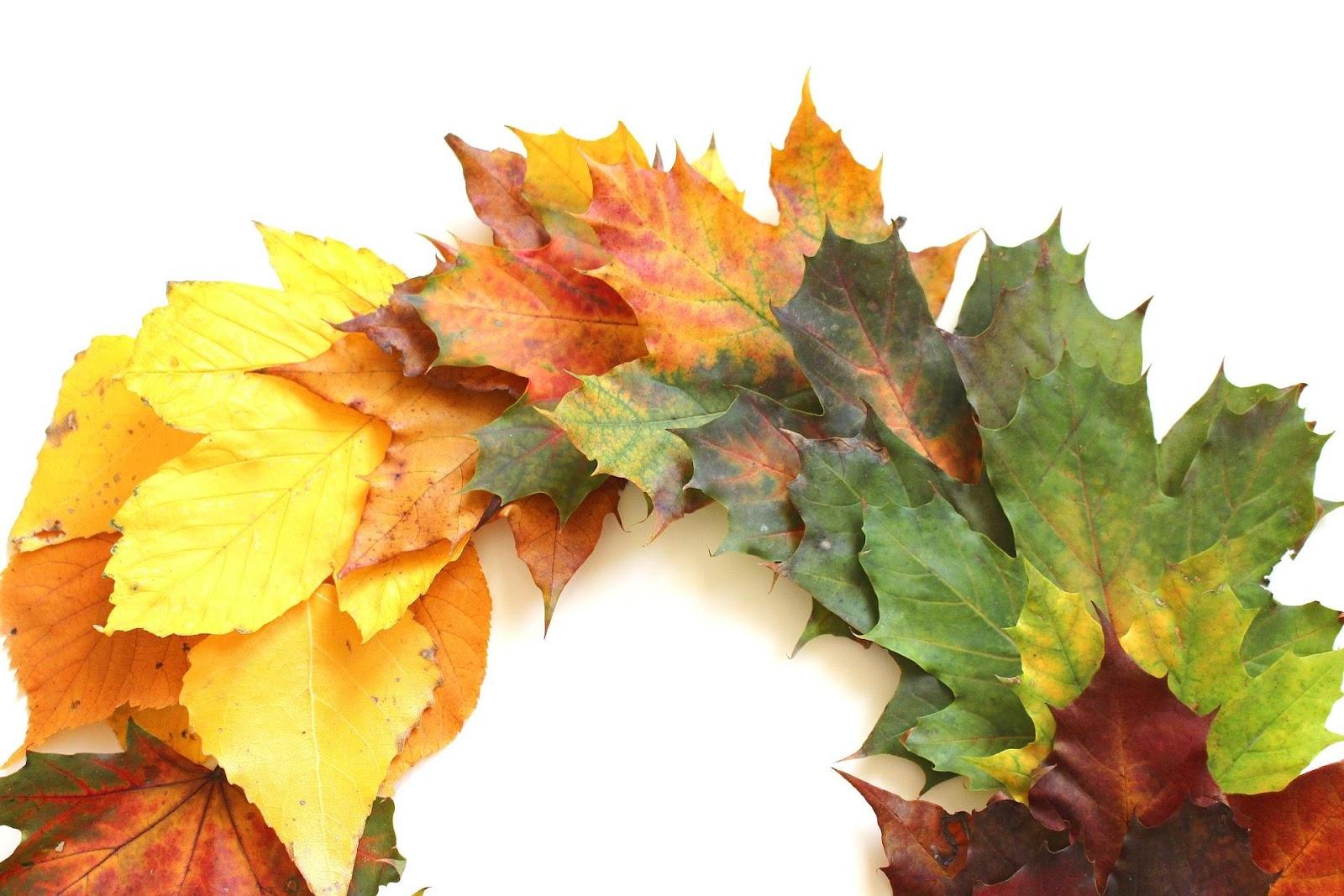 leaves-2854365_1920.jpg